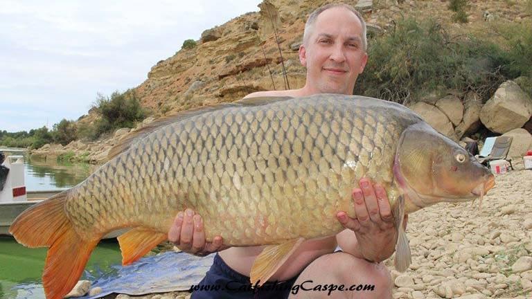 41 lbs river ebro common carp