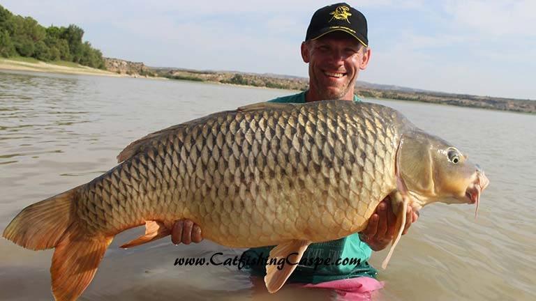 45lbs common carp with catfishingcaspe