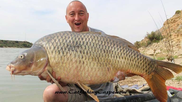 55lbs common carp from the river Ebro