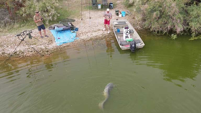 Arial catfish fight from drone footage